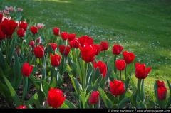 thumb_Parc-Floral-Tulipes-03