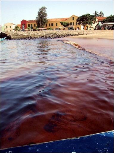 génocide pétrole