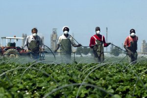 pesticides 017